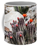 Trichocereus Cactus Flowers Coffee Mug