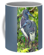 Tricolor Heron Adults In Breeding Coffee Mug