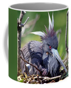 Tricolored Heron Female Incubating Eggs Coffee Mug