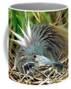 Tricolored Heron Incubating Eggs Coffee Mug