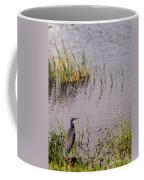 Tricolored Heron Coffee Mug