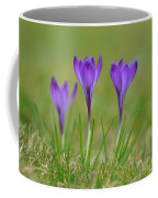 Trio In Violet Coffee Mug