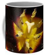 Triumph Tulip Named Gavota Coffee Mug