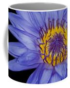 Tropical Day Flowering Waterlily Coffee Mug