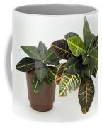 Tropical Houseplant Coffee Mug
