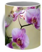 Tropical Radiant Orchid Flowers Coffee Mug