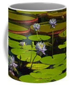 Tropical Water Lily Flowers And Pads Coffee Mug