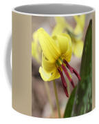Trout Lily Or Dog-toothed Violet Coffee Mug
