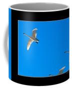 Trumpeter Swans In Color Coffee Mug