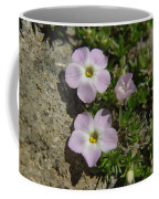 Tufted Phlox Coffee Mug