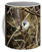 Tufted Titmouse On The Watch Coffee Mug