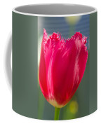 Tulip On The Gray Background Coffee Mug