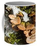 Turkey Tail Bracket Fungi Coffee Mug