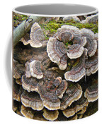 Turkey Tail Bracket Fungi -  Trametes Versicolor Coffee Mug