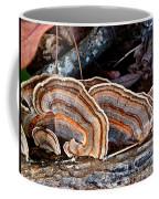 Turkey Tail Fungi In Autumn Coffee Mug