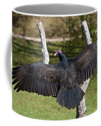 Turkey Vulture Cathartes Aura Coffee Mug