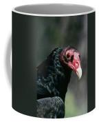 Turkey Vulture Cathartes Aura South Coffee Mug