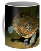 Turtles Float Coffee Mug