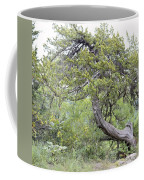 Twisted Cedar Coffee Mug