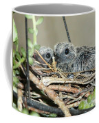 Two Baby Mourning Doves Coffee Mug