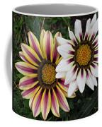 Two Gazanias Coffee Mug