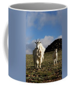 Two Mountain Goats Oreamnos Americanus Coffee Mug