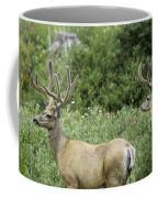 Two Mule Deer Bucks Coffee Mug