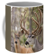 Two Mule Deer Bucks With Velvet Antlers  Coffee Mug