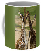 Two Reticulated Giraffes - Giraffa Camelopardalis Coffee Mug