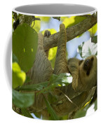 Two-toed Sloth Relaxing With A Grin Coffee Mug