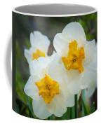 Two-toned Daffodils Coffee Mug