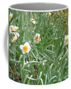 Two Toned Daffodils Coffee Mug