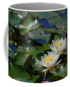Two White Water Lilies Coffee Mug