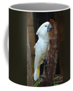 Umbrella Macaw Coffee Mug