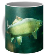 Underwater Shot Of Trophy Sized Tiger Trout Coffee Mug
