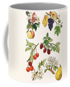 Unidentified Montage Of Fruit Coffee Mug