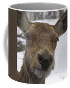 Up Close... Coffee Mug