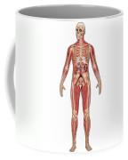 Urinary, Skeletal & Muscular Systems Coffee Mug