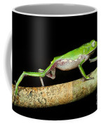 Vaillantis Monkey Frog Coffee Mug
