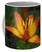 Variegated Lily Coffee Mug