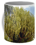 Variegated Screw Pine Coffee Mug
