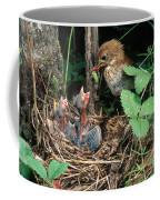Veery At Nest Coffee Mug