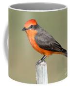 Vermilion Flycatcher Pyrocephalus Coffee Mug