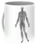 Vesalius: Nerves, 1543 Coffee Mug