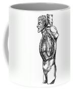 Vesalius: Thoracic Cavity Coffee Mug