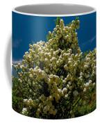 Viburnum Opulus Compactum Bush With White Flowers Coffee Mug