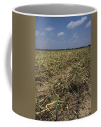 Vidalia Georgia Onion Fields Coffee Mug
