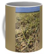 Vidalia Onion Seed Field - Georgia Coffee Mug