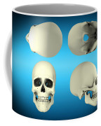 View Of Human Skull From Different Coffee Mug