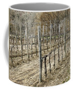 Vineyard In Early Spring Coffee Mug